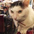 猫のいる喫茶店アルルのドライカレー